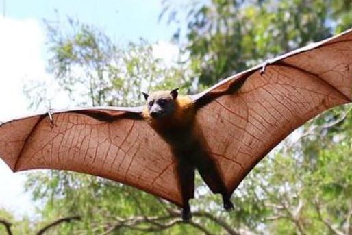 Going batty at Yarramundi