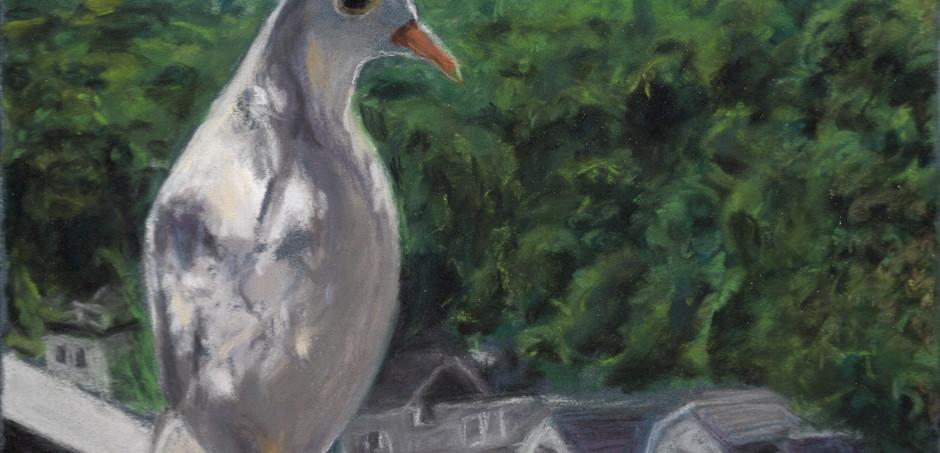 The Dove's View