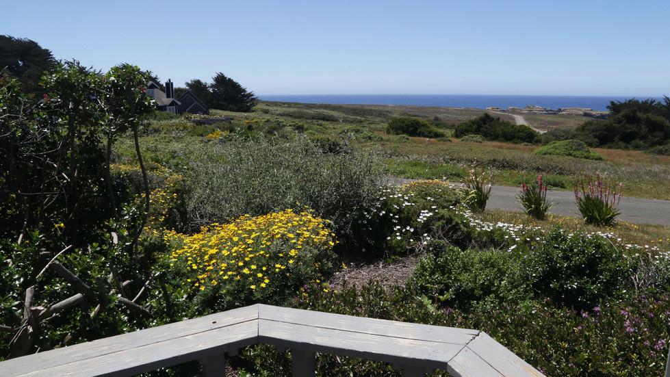 Seaside Cottage Vista-Ocean View.jpg