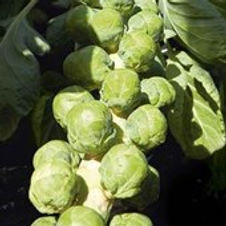 Brussel Sprouts Dimitri
