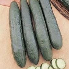 Cucumber Burpless Supreme