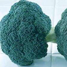 Broccoli Destiny