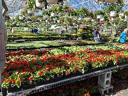 Store Greenhouse.jpg