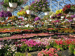 Hanging baskets 2.jpg