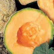 Melon Goldstar