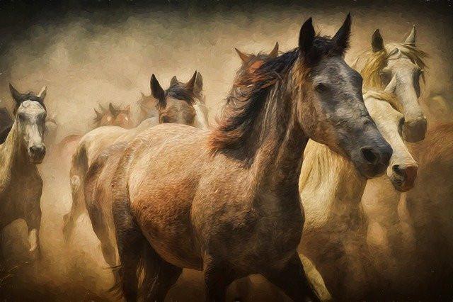 Digital Horse Painting Image using Photoshop