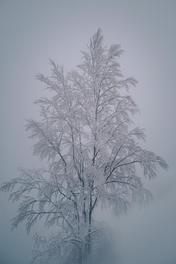 Spaziergang_Schnee&Tee-5752.jpg