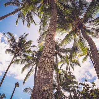 Hawaii-6335.jpg