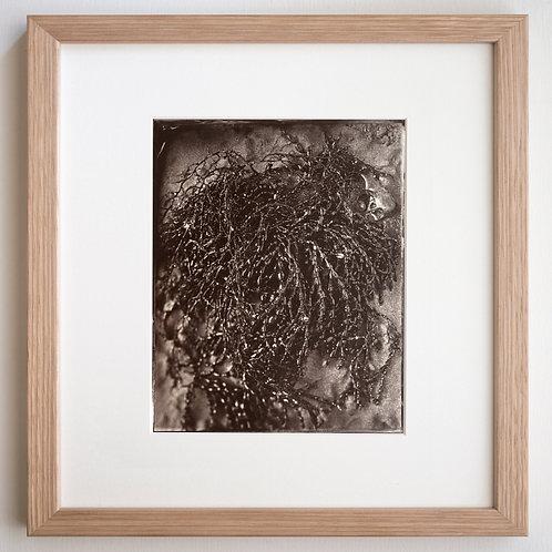 Low Tide (framed)