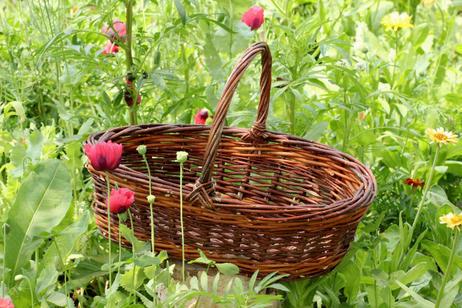 Marigold Harvest Basket - SOLD OUT -