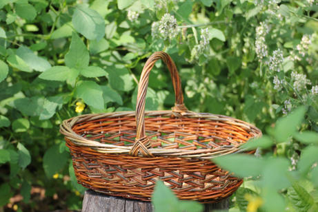 Butterfly Milkweed Harvest Basket - SOLD OUT -