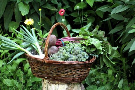 Staghorn Sumac Harvest Basket - SOLD OUT -