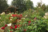 Helen Sutton Rose Garden