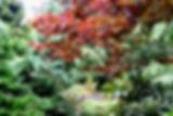 Milton Sutton Conifer Garden - Arboretum South Seattle College