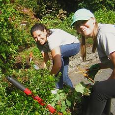 Volunteering in the Arboretum at South