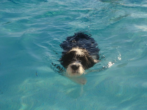 Martini went swimming for the first time