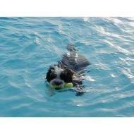 Dazzle Swimming,