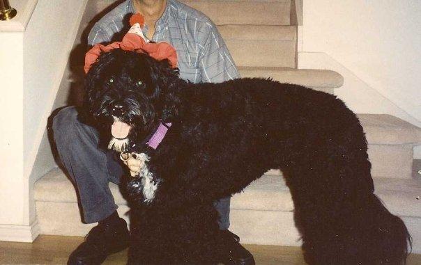 My first PWD - Tuxedo.jpg  Halloween he
