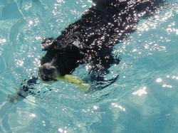 Derby doing what he likes best - swimmin