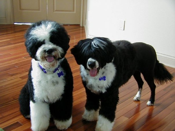 Dazzle and Sparkle - just groomed.jpg  D