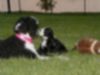 Dazzle & Pup.jpg