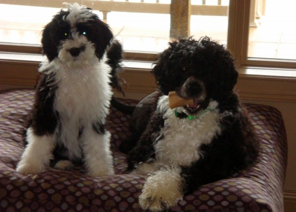 Martini with her big brother Derby.jpg