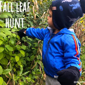 Fall leaf hunt