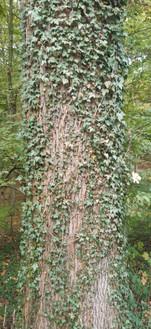 texture parsemée arbre