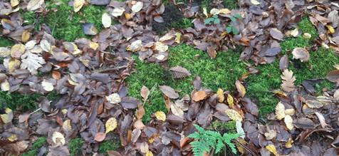 mouvement feuilles