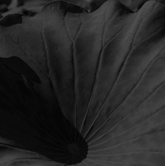 2019.lotus 05