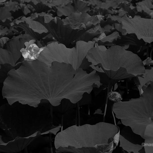 2019.lotus 01