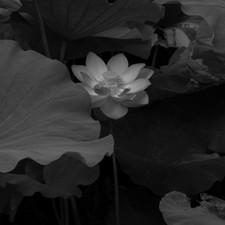 2019.lotus 04