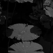 2019.lotus 02
