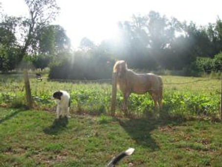 Update on Pie's training, Betty and life at Barbary!