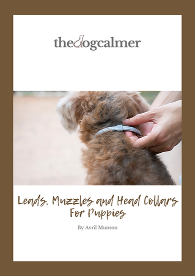 Leads Muzzles & Head Collars For Puppies Digital Booklet