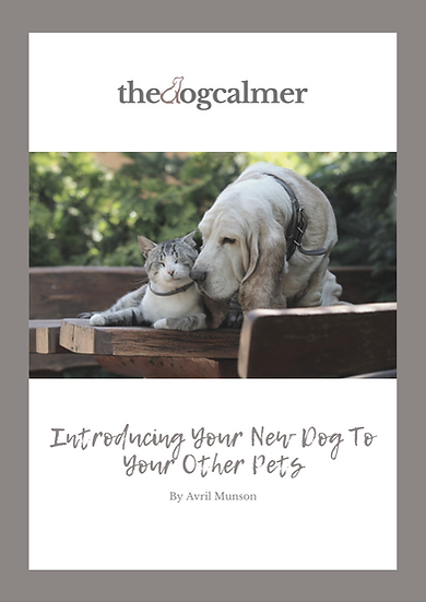 Introducing Your New Dog To Other Animals Digital Booklet
