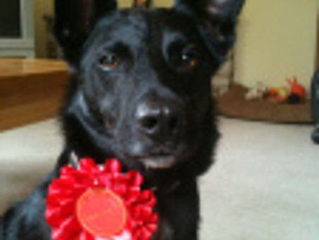 News and rosettes!