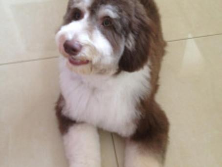 Titbit training and posh pup!