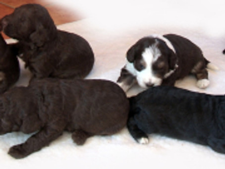 Puppies 3 weeks old today!