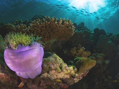 Innovación para un Océano Sostenible