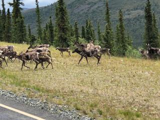 Top of the world Highway bis zum Denali Nationalpark