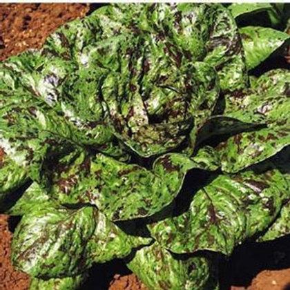 Freckles Lettuce - 600 Seeds