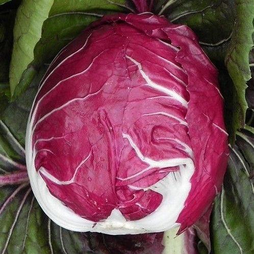 Rouge de Verona Radicchio - 1000 Seeds