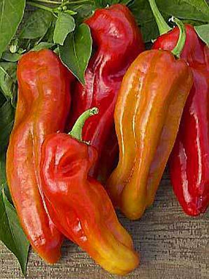 Cubanelle Pepper - 75 Seeds