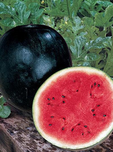 Sugar Baby, Watermelon - 40 Seeds