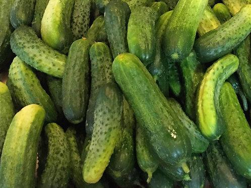 Addis Cucumber - 30 Seeds