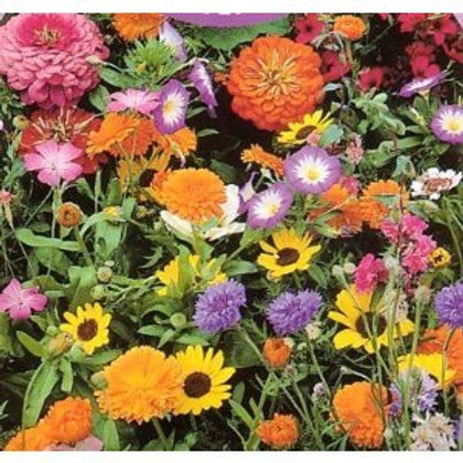 Bee Friendly Wildflower Mix - 150 Seeds
