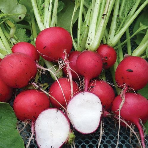Cherry Belle Radish - 500 Seeds