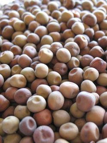 Dundale Pea Cover Crop - 200 Seeds