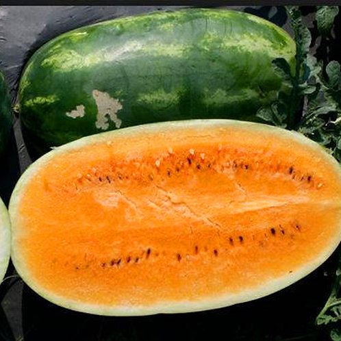 Tendersweet Orange Watermelon - 25 Seeds